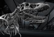 Royal Ontario Museum Indoor Photo Tour