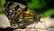 Photographing Butterflies at the Niagara Butterfly Conservatory