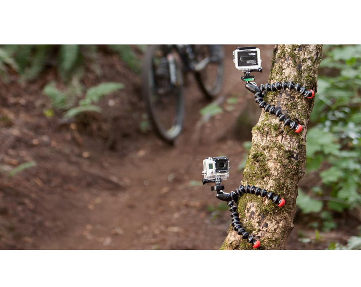 action-tripod-gopros-tree.jpg